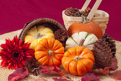 Still life with pumpkins, cones, and baskets Royalty Free Stock Photos