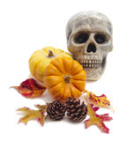 Still life with pumpkins, cones and skull Royalty Free Stock Images