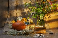 Still life with pumpkins and flowers royalty free stock images