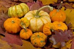 Still life of pumpkins Stock Photo