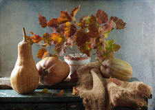 Still life with pumpkins stock image