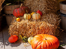 Still life pumpkins Royalty Free Stock Photos