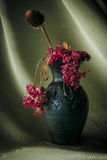 Still Life Purple Flower Royalty Free Stock Photo