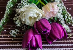 Still life of purple and pale pink tulips with spirea twigs.  royalty free stock image