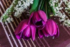 Still life of purple tulips with spirea sprigs.  stock photos