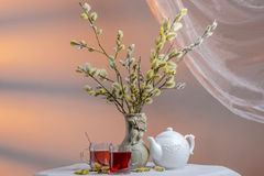 Still life with pussy willow, two glass cups of tea and porcelain kettle Royalty Free Stock Image