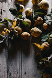 Still Life Quinces Royalty Free Stock Images