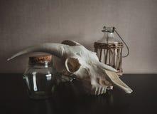 Still life with ram skull and old bottle on dark Stock Photos