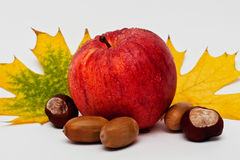 Still life with red Apple and yellow leaves. Still life with a big red Apple yellow maple leaves, acorns and chestnuts Royalty Free Stock Photos