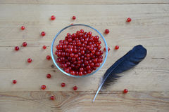 Still life with red currant Stock Image