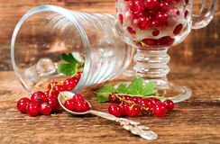 Still life with red currants in glass Royalty Free Stock Image