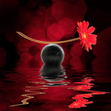 Still life of a red daisy with reflections on black background Stock Photo