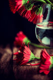 Still Life with Red Gerberas Royalty Free Stock Image