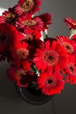 Still life with Red Gerbera Flowers Bouquet Top View on sunlight and shadow. Still life with Red Mini Gerbera Flowers Bouquet Top View on sunlight and shadows Stock Photography