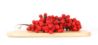 Still life with red natural rowan Stock Photography