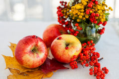 Still life of red ripe apples on the spikelets Stock Photo