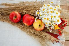 Still life of red ripe apples on the spikelets Royalty Free Stock Image