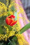 Still-life with red tulips yellow mimosa Stock Images