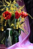 Still-life with red tulips yellow odorous mimosa Royalty Free Stock Photography