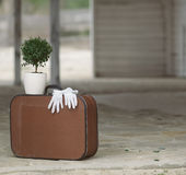 Still life with retro suitcase and myrtle tree Royalty Free Stock Image