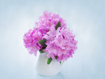 Still Life with rhododendron flowers Stock Photos