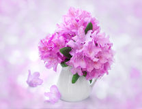 Still Life with rhododendron flowers Royalty Free Stock Image