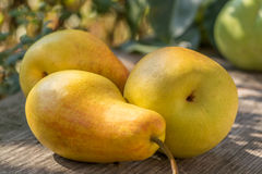 Still life of ripe juicy pears Royalty Free Stock Photos