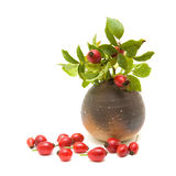 Still-life with rosehips Royalty Free Stock Image