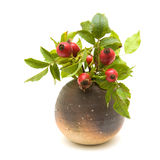 Still-life with rosehips Royalty Free Stock Images