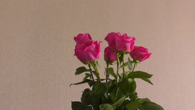 Still life with roses stock video footage
