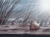 Still life at the sea for mothers day. Still life at the sea on a wooden board in front of dune grass for mothers day and valentines day royalty free stock image