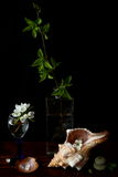 Still life with sea shell. S and apple flowers Royalty Free Stock Photography