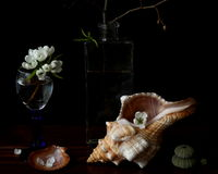 Still life with sea shell. S and apple flowers Royalty Free Stock Images