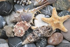 Still life with seashells. Still life with seashell of the miscellaneous of the size and pebble Stock Photo