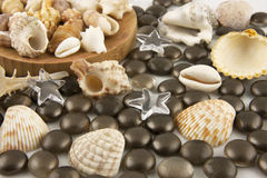 Still life with seashells and decoration Stock Photography