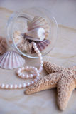 Still life seashells and seastar. Still life in pastel tones with seashells and seastar Stock Photo