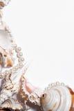 Still life  seashells on a white background. Empty blank framed seashells Stock Photos