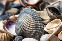 Still life  seashells on a white background. Empty blank framed seashells Stock Photo