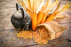 Still life of seed corn,old kettle and dried corn Royalty Free Stock Photography