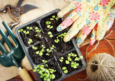 Still life with seedlings and garden tools Royalty Free Stock Photos