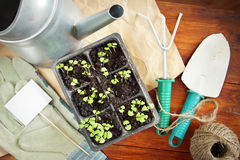 Still life with seedlings for transplantation and garden tools Royalty Free Stock Images