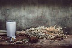 Still life- sheaf oats, daisy Royalty Free Stock Photos