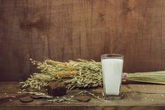 Still life- sheaf oats Royalty Free Stock Image