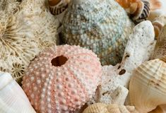 Still-life with shells Royalty Free Stock Images