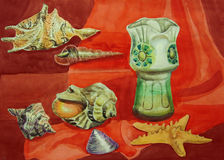Still life with shells Stock Images