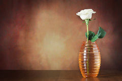 Still life with a single rose in the vase Stock Images