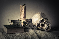 Still life skull Royalty Free Stock Photography