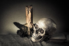 Still life skull Royalty Free Stock Photos