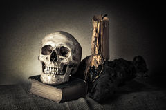 Still life skull royalty free stock photography