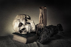 Still life skull Royalty Free Stock Photo